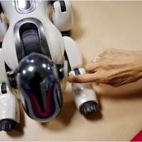 Un résident touche «AIBO», un robot chien de compagnie, à la maison de retraite Shin-tomi à Tokyo, au Japon.