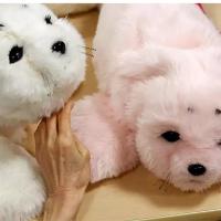 Un résident touche la fourrure du robot 'PARO' à la maison de retraite Shin-tomi de Tokyo, au Japon.