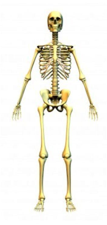 squelette-gd.jpg